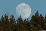 Velký Měsíc. Autor: David Hoffmann.