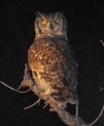 Umělé osvětlení ovlivňuje noční živočichy Autor: Michal Bareš