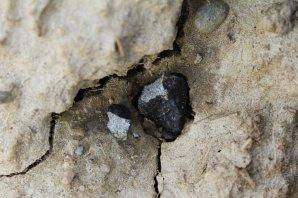 Druhý meteorit (M2) tak, jak byl nalezen dopoledne 23. března 2016. Velká část meteoritu byla zabořena do hlíny (7.2 g) a malý úlomek (0.45g) ležel na povrchu. Autor: R. Sporn, M. Neuhofer