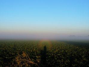 Gloriola z 30. července 2016, Bánov pri Nových Zámkoch. Snímek vznikl při východě Slunce na vstvě mlhy nad polem. Autor: Ernest Šorokšári