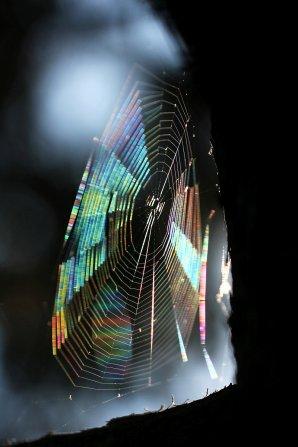 Difrakce na pavučince. Autor: Daniela Rapavá.