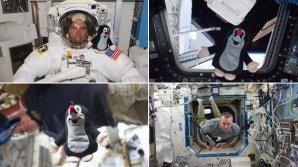 Odlišný exemplář českého Krtečka zavítal na palubu stanice ISS s Andrewem Feustelem již v roce 2011 Autor: Gizmodo.com.au