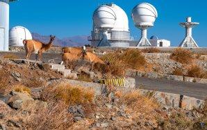 Divoké lamy pasoucí se na observatoři ESO, La Silla, Chile Autor: Zdeněk Bardon