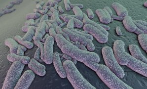 Bakterie E-coli Autor: Hvězdárna a planetárium Brno