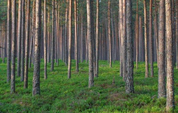 Pohled v každém směru zastiňuje strom, stejně jako by pohled na oblohu měl být plný hvězd. Autor: Hvězdárna a planetárium Plzeň