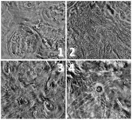 1: koróny Anahita a Pomora, 2: Fortuna Tessera, 3: Arachnoidy v oblasti Bereghinya, 4: kráter Duncan. Veněra 15 a 16 Autor: Don P. Mitchell