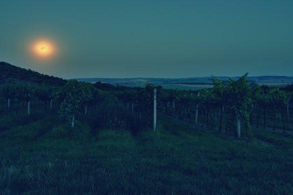 Měsíc ve vinici Autor: Karel Křen