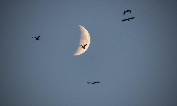 Podvečerní Měsíc. Autor: Radka Brandová