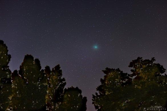 Kometa Wirtnanen nad stromy ze španělského města Figueres. Autor: Juan Carlos Casado.