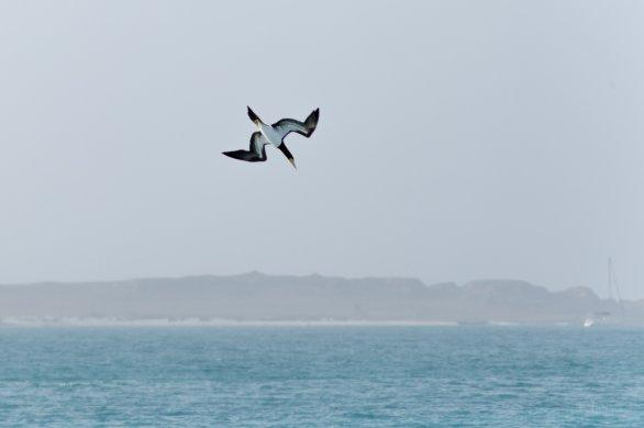 Boa Vista je hnízdištěm vzácných ptačích druhů. Autor: Petr Horálek.