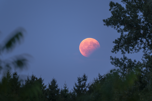 Zatmění Měsíce 7. sprna 2017 mezi stromy. Autor: Petr Horálek.