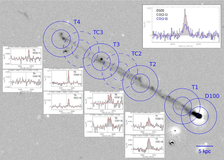 Na pozaďovém snímku ohonu D100 z dalekohledu Subaru jsou vyznačeny kružnicemi pozorovací body, v nichž byly vyhodnocovány slupcové hustoty oxidu uhelnatého. V jednotlivých panelech jsou pak zobrazena spektra dvou pásů CO pro čtyři hlavní pozorovací body, zcela nahoře pak totéž pro těleso galaxie. Autor: Pavel Jáchym